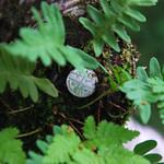 Craobh Airgid/Money Tree thumbnail