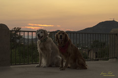 My Heart and My Soul (Justitia Omnibus) Tags: dog arizona landscape canon clouds desert life phoenix mountains love sky sunset orange summer light usa