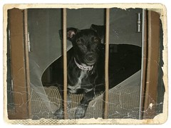Looking at the world through the window at home (*Maria L) Tags: dog animal nature home window look eyes view vision visibility days day rain refuge reflection meditation