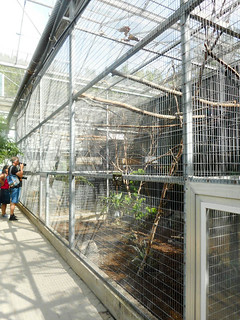 Tropical hall; birds like tucanets, trumpetbirds, roulroul, etc