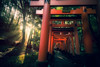 Fushimi Inari Shrine (hyeenus) Tags: kyoto handheld hdr a6300 samyang12mm fushimiinarishrine japani kyōtoshi kyōtofu japan jp