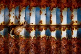 Macro Mondays Rust