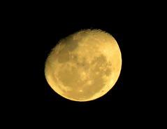 GOLDEN MOON (Lani Elliott) Tags: lanielliott nature naturephotography sky skies moon lunar goldenmoon blackbackground golden australia tasmania light excellent beautiful gorgeous incredible wow fantastic