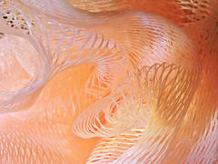 Pastel Pouf (Hope2b) Tags: abstractmacro macromondays bath mesh pouf pastel swirly