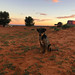 The dog of Monument Valley in Navajo Nation