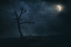 Night speeches (Mimadeo) Tags: night art dark darkness dramatic dusk evening evil fantasy dead dry fear fog foggy gloomy grunge halloween horror landscape magic mood moody moon moonlight mysterious mystery nature light nightmare rural scary shadow silhouette sky spooky surreal texture tree bare trunk stem solitary lonely