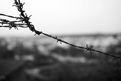 Barb wire (petrwag) Tags: sigma30mmf14 sony a6500 bw blackandwhite blancoynegro blackwhite černobílé czech clickcamera bokeh prague praha photographing praga