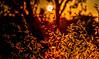 shimmer down (Just Ron ;)) Tags: sunset imageron orange silhouette nikon güneş tokina bokeh red nature light