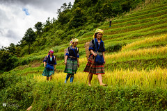 Mountainer (Hồ Viết Hùng (Thanks so much for 1mil. views!) Tags: vietnam nikond800 mountain people field rice