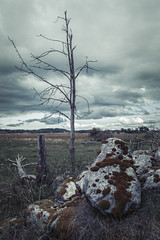 Angarn (martinyasmine) Tags: nature sweden tree landscape alone old autumn isolated isolation blue sky skies dramatic