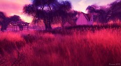 Mystical Fae Forest (Romannie Gypsy-Eden) Tags: mystical landscape secondlife tress grass lights