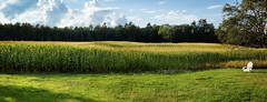 Five Acres (Dorian Susan) Tags: lyman me newengland panoramic open landscape field farm corn light sky clouds chair view maine green lush aligned repetition curve lines summer trees yellow friend