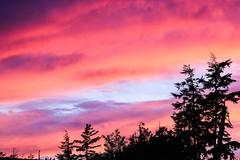 Pacific sunset (Jessie T* -- still catching up) Tags: uclueletbc canada westcoast vancouverisland sunset dusk tree sky summerholiday