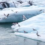 Glacier lagoon thumbnail