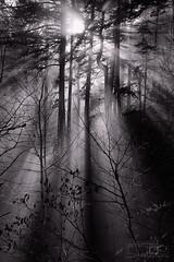 Around The Corner (Adrian Klein) Tags: adrianklein amazinglight sunbeams columbiagorge oregon pnw pacificnorthwest triplefalls hike barefoliage winter trees forest evergreen beaming sunshine feelthewarmth getoutside seeingisbelieving