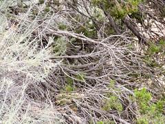 P1170981 (MilesBJordan) Tags: new mexico newmexico santa fe santafe outdoors outside flowers trees wildlife