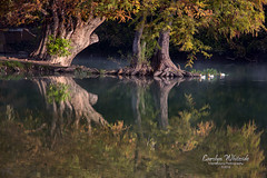 Tranquility Island Kerrville Ducks