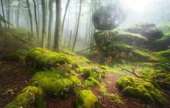 CHALLENGING PHYSICS (Anderony) Tags: urbasa bosque encantado forest niebla fog green canon navarra spain españa
