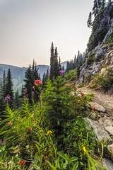 Wildflowers along the Maple Pass Trail (i8seattle) Tags: maplepass maplepassloop lakeannmaplepassloop lakeann heatherpass northcascades northcascadeshighway rainypass