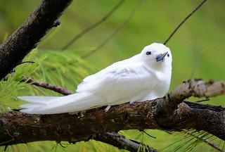Seychellen, Bird Island