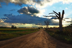 It could be mistaken for Nebraska, except for the trees (nelhiebelv) Tags: stump sunset clouds road farms sunny