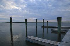 Calm Dock (chantsign) Tags: sunset dock poles birds blue sky bay clouds reflection