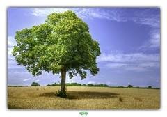 ME AND MY SHADOW (régisa) Tags: arbre d90 auvergne shade ombre puydedôme sam sammydavisjr shadow champ