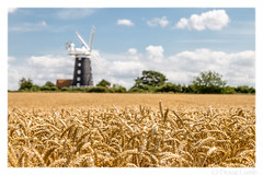 Fields of Gold (don't count the pixels) Tags: norfolk wheat corn harvest windmill depthoffield shallowdepthoffield summer sky clouds