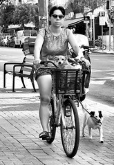 Doggone (canonsnapper) Tags: bike bicycle dog israel telaviv olympusomdem5 candid street streetphotography