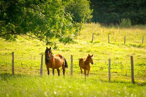 Big Horse, Lil' Horse (Spain, Galicia, Lugo)
