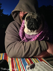 NewportCamping17-77 (TrishaLyn) Tags: newport oregon camping southbeachstatepark pugs dogs animals fawnpug pixelpugprincess pixel dominicfawver people