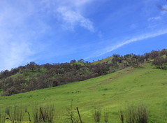 Nature (Balaji Photography - 4.8M views and Growing) Tags: canon canondslr canoneos canon70d usa california napa nature naturesgift naturesfinest naturemountains green greencover greenery greenforest