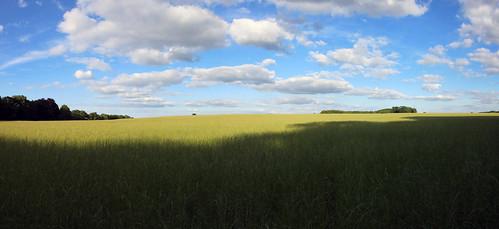 Wiltshire panorama