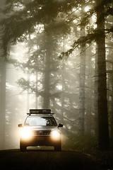 2012 Subaru Forester (donaldgruener) Tags: 2012 subaru forester sh subaruforester forest oregon coastrange fog mist headlights backroads