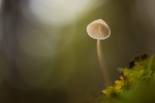 Mushroom in the light