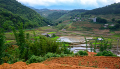 Sa Pa (free3yourmind) Tags: sa pa rice fields terraced mountain clouds cloudy day vietnam hills