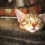 Happiness is being able to sleep wherever you want! 😺 thumbnail