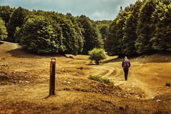 On the way (Japo García) Tags: bosque camino montaña verano escursión mochila sendero senderismo caminar andar uno solo soledad meditación vocación pinos hierba señal señalización ruta