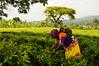 Ashley Peterson - DSC_0783 (LandOLakesID) Tags: ige innovation tanzania usaid africa gender smallholder