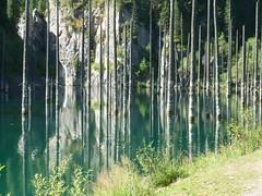 Kaindy lake (plutogno) Tags: kazakhstan earthquake 1911 lake birch spruce