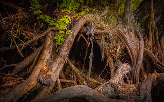 Tree-Trunk Cave