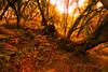 ...autumn is coming... (www.infografiagijon.es) Tags: wwwinfografiagijones infografia gijon astur asturias asturies xixon hernancad canon eos5d markii