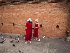 Chiang Mai (Fromthepolder) Tags: chinese animals feed red reddress tourists pigeons thailand chiangmai