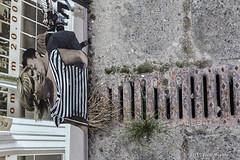 Streetlife (Pieter Musterd) Tags: rooster straat street stoep denhaag pietermusterd musterd canon pmusterdziggonl nederland holland nl canon5dmarkii canon5d 'sgravenhage thehague zuidholland paysbas thenetherlands niederlande haagspraak allrightsreserved 2017©pietermusterd