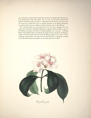 Anglų lietuvių žodynas. Žodis strophanthus reiškia <li>Strophanthus</li> lietuviškai.