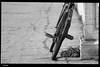 IMG_4631 (anto-logic) Tags: bicicletta bicycle bike ruggine rust rusty old vecchia abbandonata abandoned strada street streetshot catena chain ingranaggio gear gearloose domenica passeggiata walking walk centrostorico oldtown pentagonodelbuontalenti muro wall muri walls mattoni bricks mattone brick fossi scali lavenezia livorno toscana officina fiori piante aria aperta lbertà libero bello puntodivista profonditàdicampo fence gardens green plants outdoors liberty lovely free pointofview depthoffield pov focus bokeh relax relaxed gorgeous nice pretty perfect eos canon