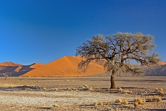 Lonely Tree in Desert (aivar.mikko) Tags: lonely tree dunes dune sand sossusvlei bluesky blue sky namibnaukluftnational park namibia desert namibnaukluft national namib naukluft namibian desertlandscapes southafrica southafrican south africa african namibianlandscapes landscape landscapes scenic view dune45 45
