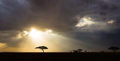 Mimi kama wewe! (Beppe Rijs) Tags: africa afrika landschaft panorama serengeti sonne sunlight tansania tanzania clouds landscape light sunrays view baum tree sonnenuntergang sundown himmel sky nationalpark np park steppe