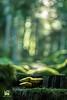 CASCATA (Lace1952) Tags: autunno cascata luce bosco sottobosco fungo funghi effetto controluce sfocato bokeh panasonic lumix primoplanmeyer50mmf1e9