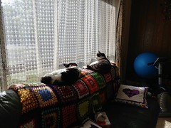 30Sep17 - Synchronised sunning in the Gym. #catsofinstagram #homegymlife #2017pad #photoaday #picaday